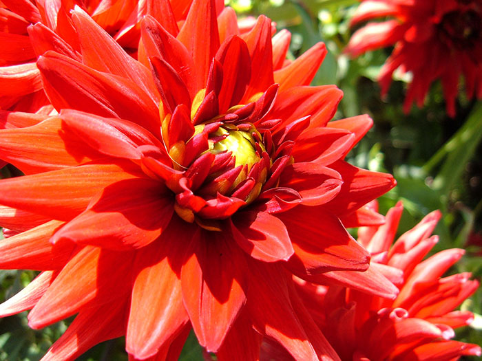 flower red close up